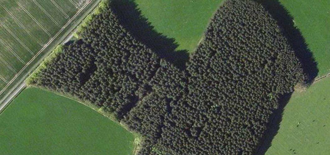 Goldcrest   Property - Kaimes West Wood