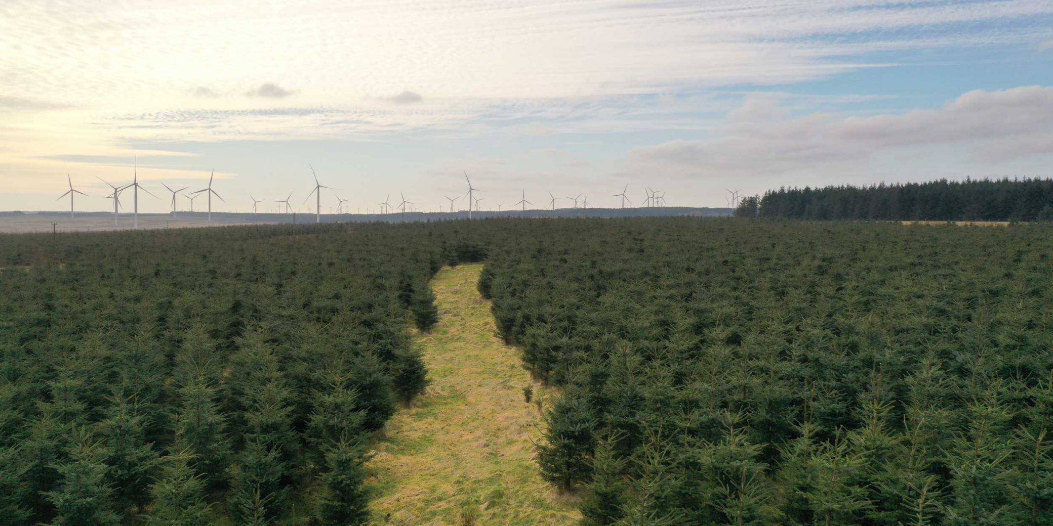 Goldcrest Land & Forestry | Central Scotland Portfolio — 01