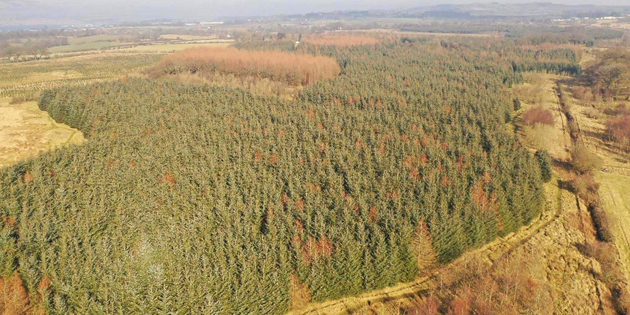 Goldcrest Land & Forestry | Central Scotland Portfolio — 06