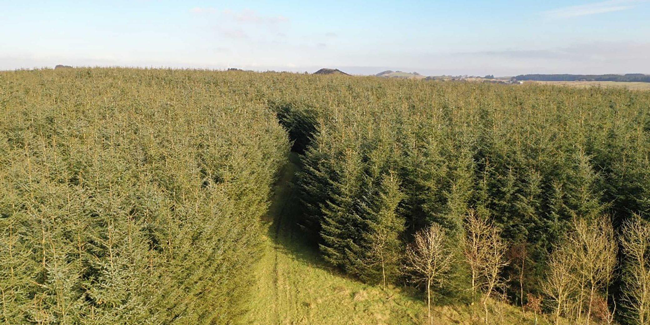 Goldcrest Land & Forestry | Central Scotland Portfolio — 07